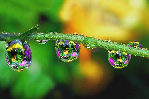 Gocce d'acqua con riflesso dentro qualcosa di bello